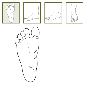 foot-diagram-screenshot